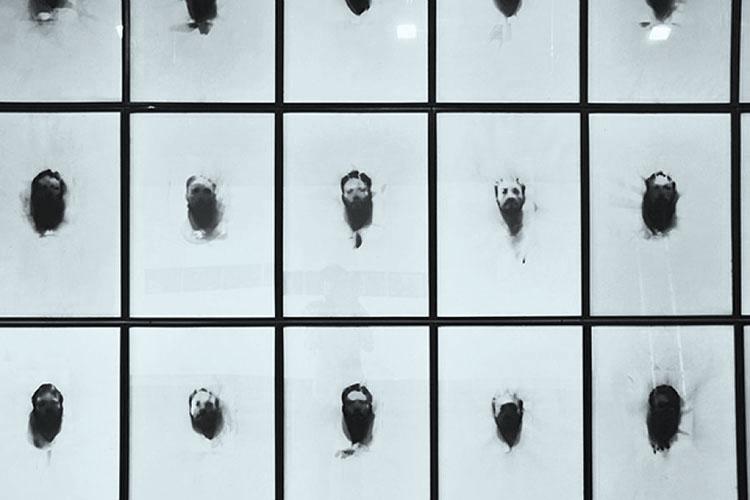 Serie Umbra et Imago / 2009